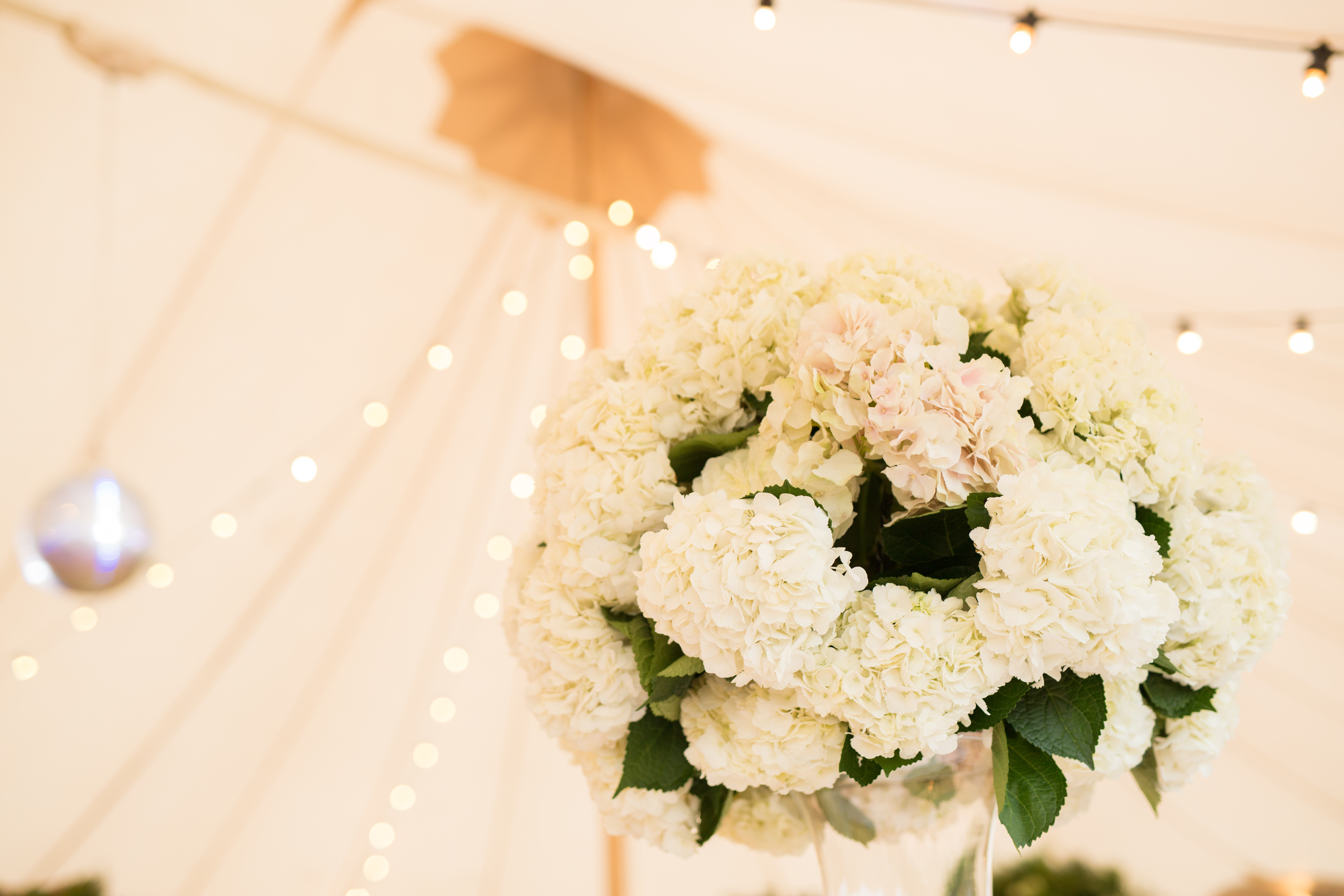 White hydrangeas by Hart Company against the oyster coloured Sperry canvas